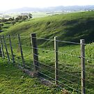 Looking over rural Masterton by Barbara Caffell