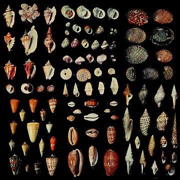 Shells by goodsenseshirts