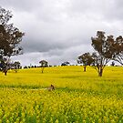 Fields Of Gold - Bathurst NSW Australia by Bev Woodman