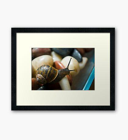 Macro Garden Snail Framed Print