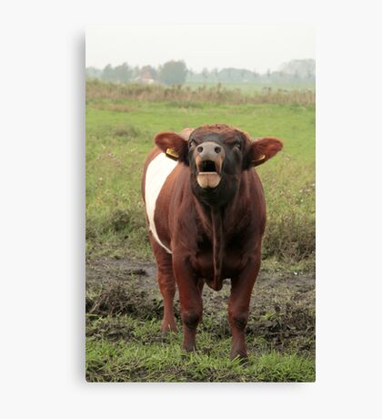 Dutch Belted Bull Canvas Print
