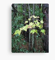 Chartreuse  Canvas Print