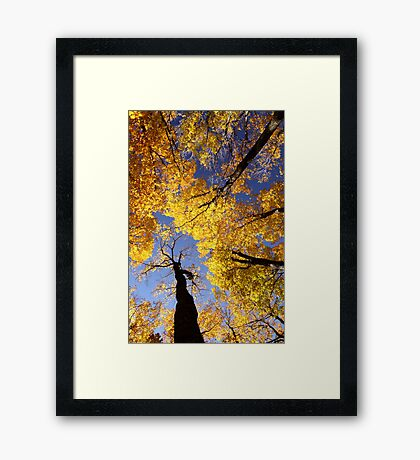 Sky Dancer Framed Print