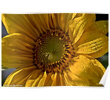Sunflower  .  tribute to Sun of Jamaica .  My rememberance  by  Brown Sugar . Poster