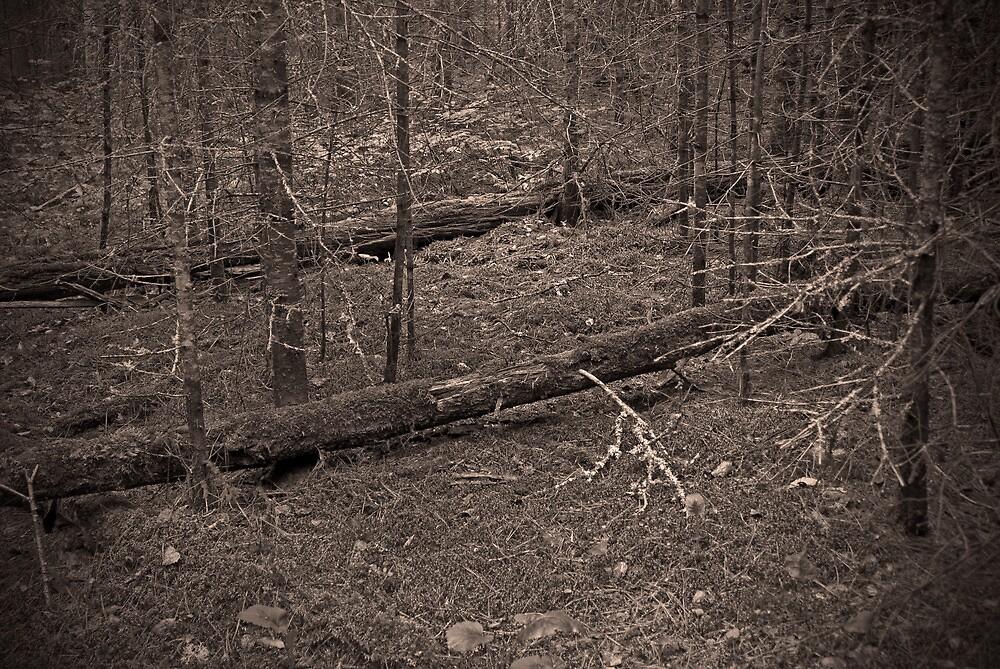 Bear Log by Aaron Bottjen