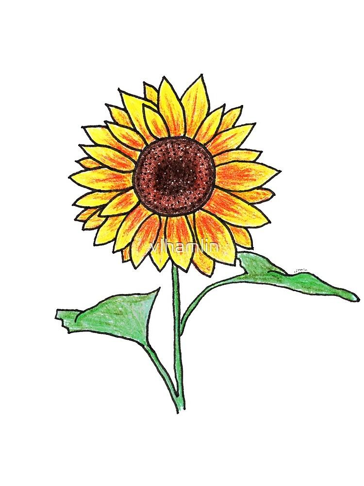 Sunflower by vlhamlin
