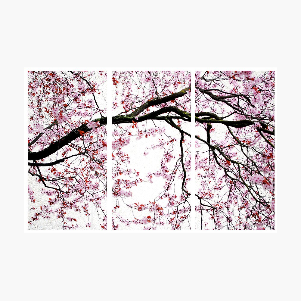 Cherry Blossoms- The Panel Series Lámina fotográfica