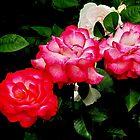 Cherry Parfait Trio by Beth Brightman