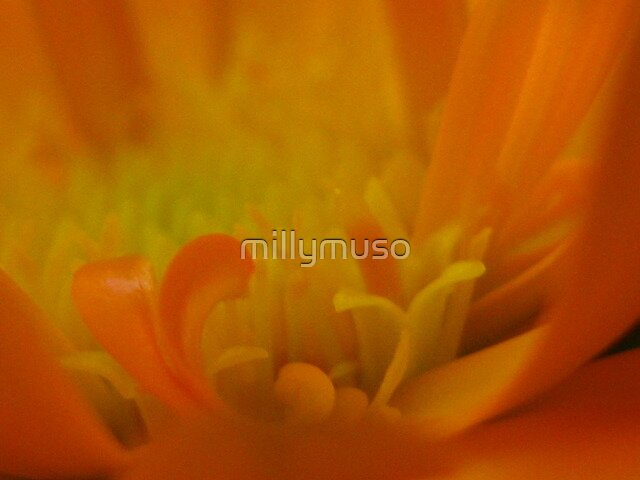 marigold folds by millymuso