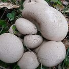 Puff-Ball Fungi by MaeBelle