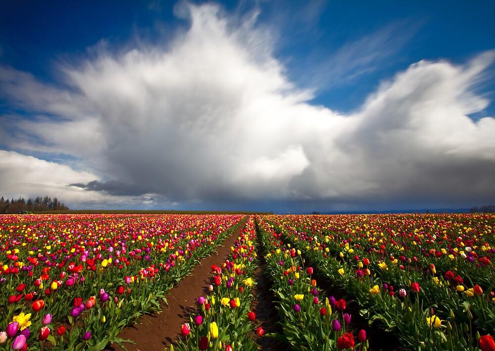 """April Showers April Flowers"" by Darren White   Redbubble"