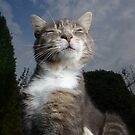 Tabby cat scratching in garden by turniptowers