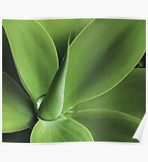 Agave Poster