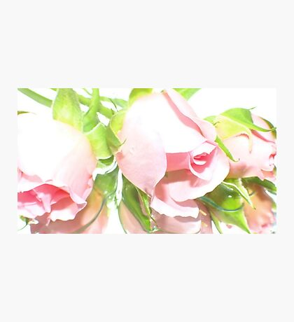 Pink Rosebuds Photographic Print