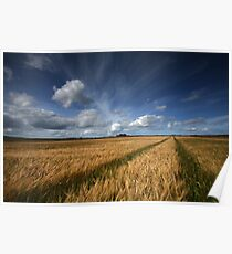 Barley field, Caithness, Scotland Poster
