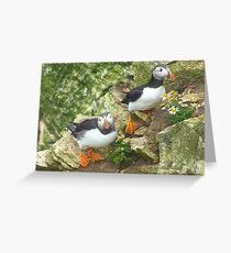 Puffins on Bempton Cliffs. Greeting Card