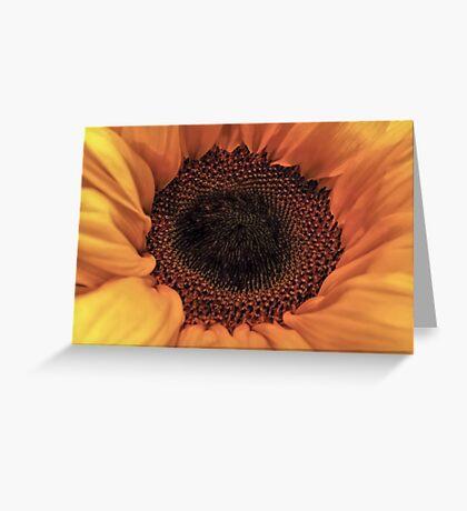 Sunflower - Macro Close Up Greeting Card