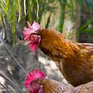 Feather Friends Collection - Chickens by coastal-west