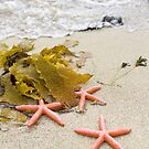 Stunning Seashore Collection - Starfish 2 by coastal-west