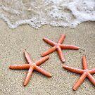 Stunning Seashore Collection - Starfish 3 by coastal-west