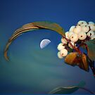 Shoot For The Moon by Bonnie Comella