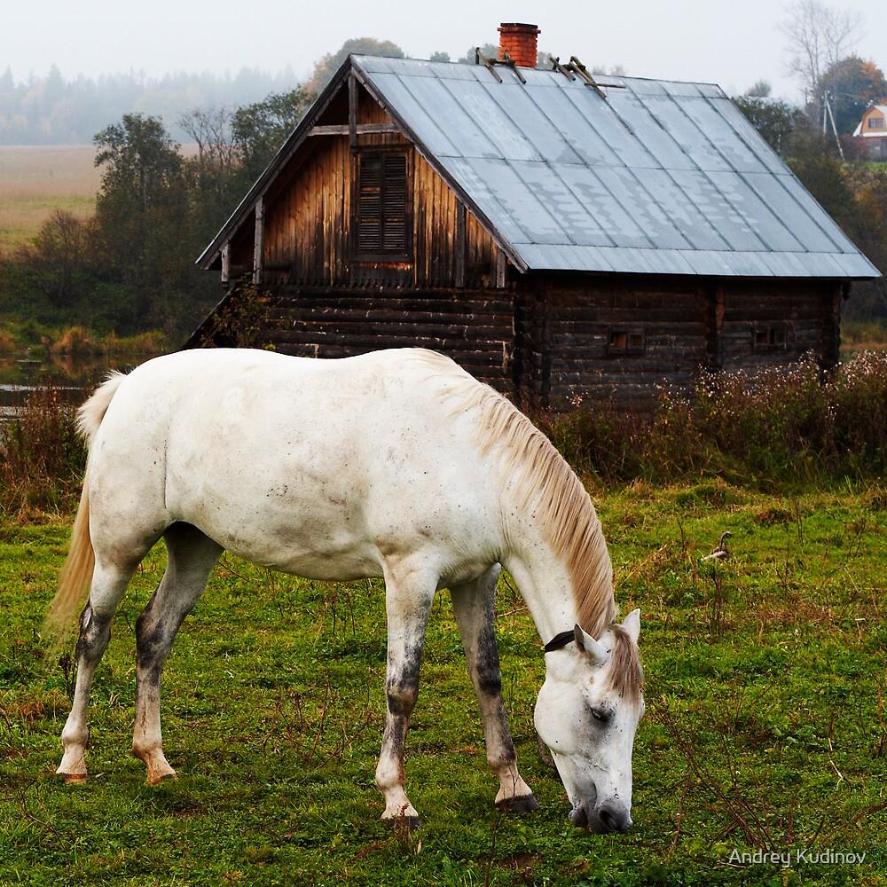 White horse by Andrey Kudinov