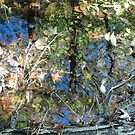 Autumn Puddle Reflections by linmarie