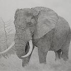 African elephant by Istvan Natart