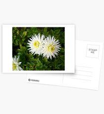 Dahlia Twins Postcards