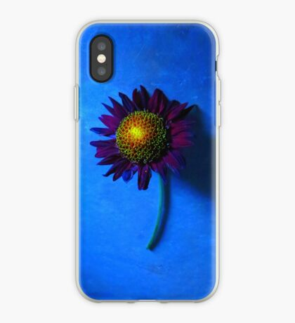 Sunflower with Blue Background iPhone Case