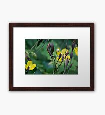 slug dancing on a poppy Framed Print