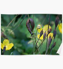 slug dancing on a poppy Poster