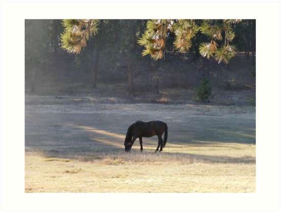 Equine Tranquility by Marie Smith