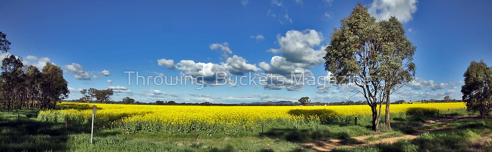 Canola spread by Throwing  Buckets Magazine