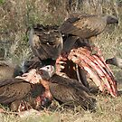 Classic africa-vultures at a carcass by jozi1