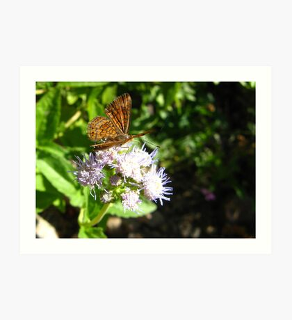 Butterfly ~ Fatal Metalmark Art Print