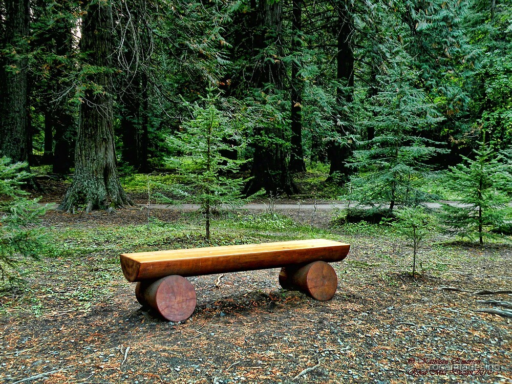 Forest Bench by rocamiadesign