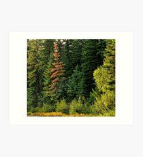 Flathead National Forest Art Print
