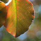 Autumn Leaf Bokeh by Colleen Drew
