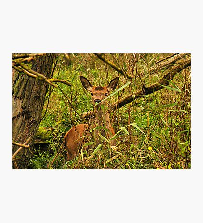 See You Deer Photographic Print