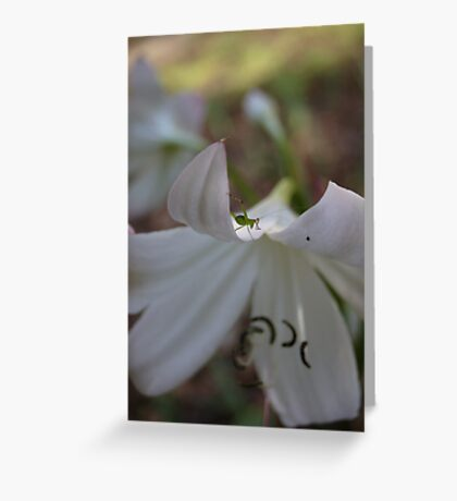 White lily and tiny grasshopper Greeting Card