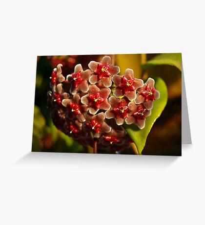 Red Hoya Greeting Card
