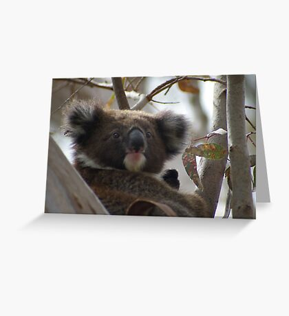 Young koala - Adelaide Hills Greeting Card