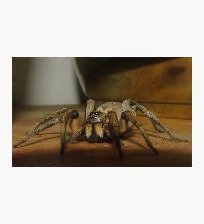 Wolf Spider Photographic Print