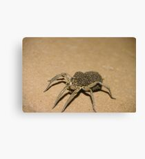 Wolf Spider and spiderlets Canvas Print