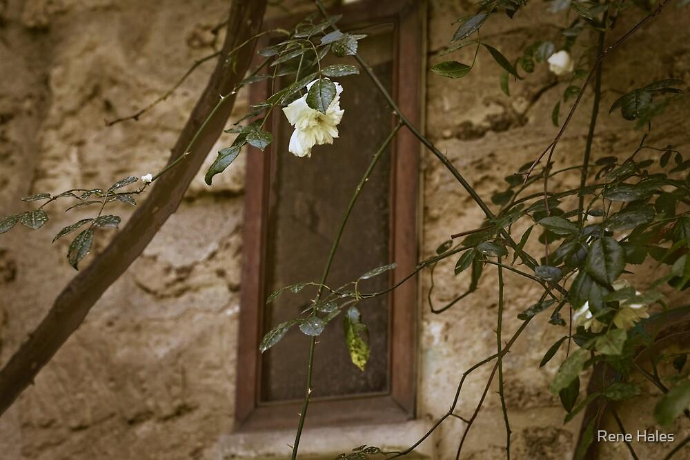 Garden Window, Lecce, IT by Rene Hales