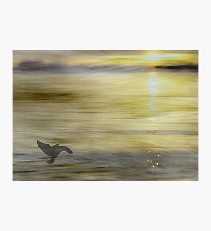 A bird and  the sun Photographic Print