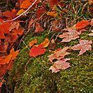 """""""Fallen Dew Leaves"""" by MarieR"""