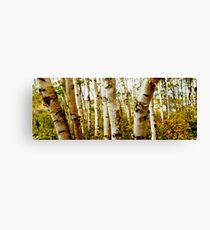 Nova Scotia Trees Canvas Print