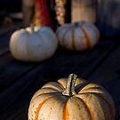 Pumpkins by Sue  Cullumber